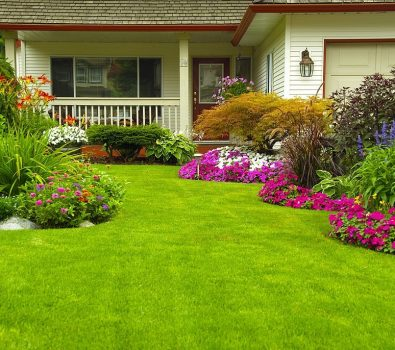 Lawn for Spring