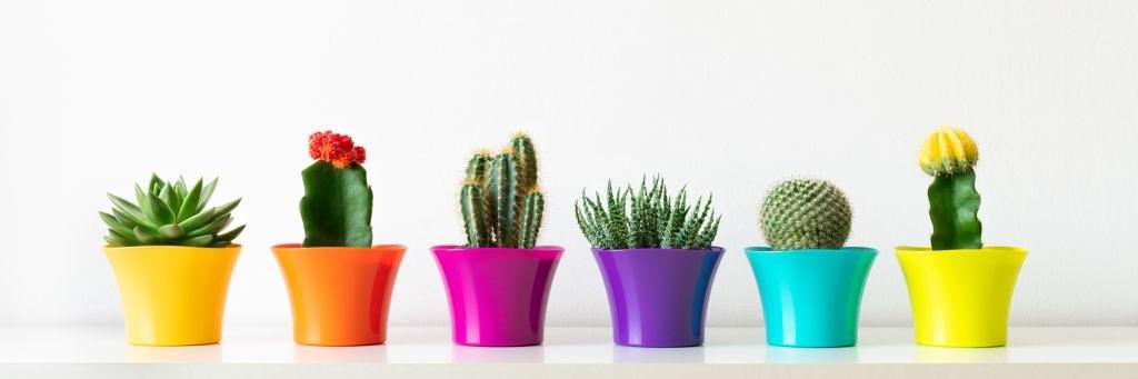 Succulents Pots