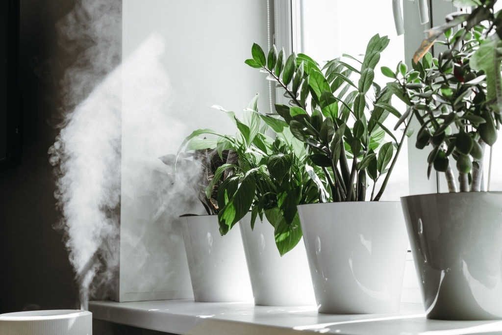10-Best-Humidifier-For-Plants