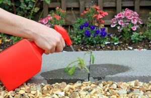 10 Best Weed Killer For Gardens 2020 Reviews
