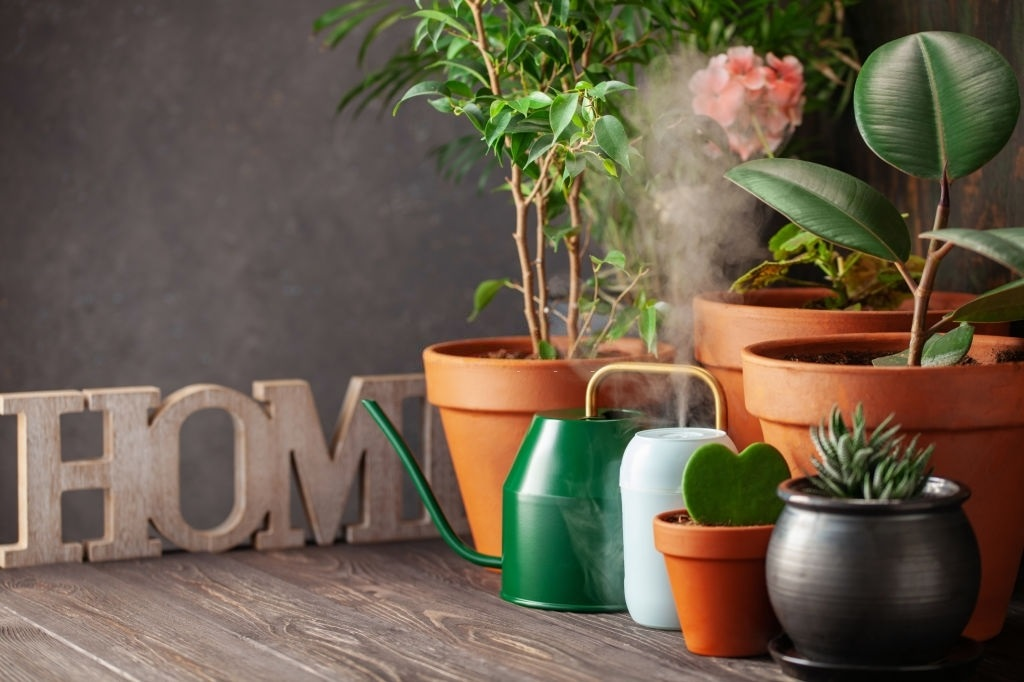 Humidifier For Plants