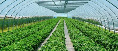 10 BEST GREENHOUSE PLASTIC
