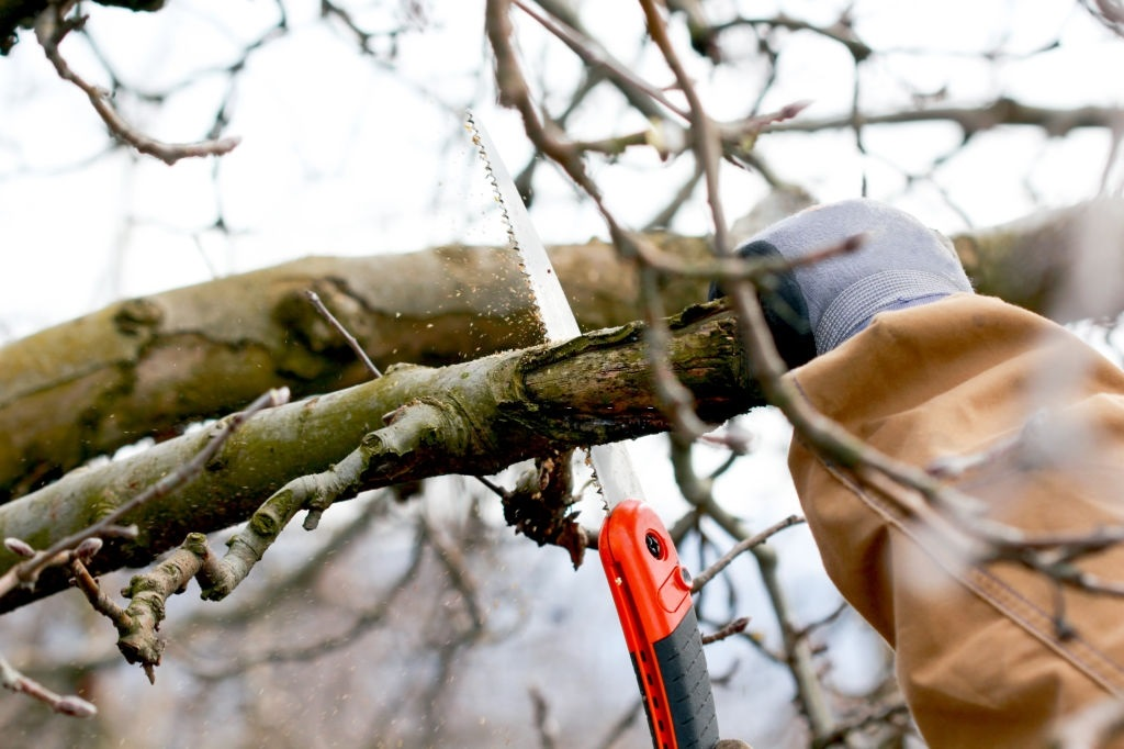 10 Best Pruning Saws