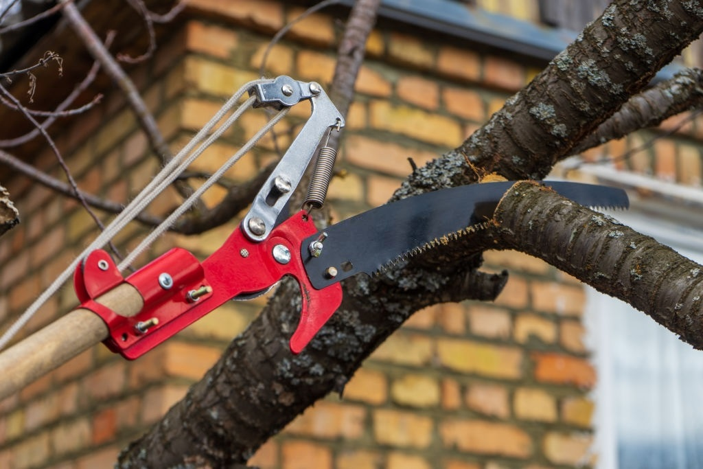 Best Pruning Saws Reviews