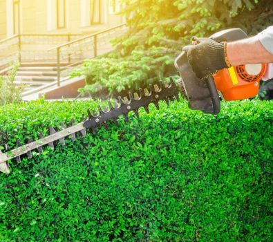 10 Best Gas Hedge Trimmer Reviews