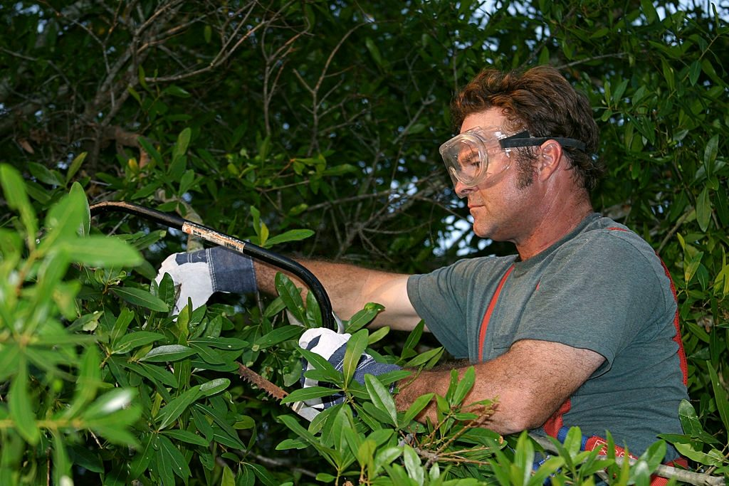 10 Best Hand Saw for Cutting Trees