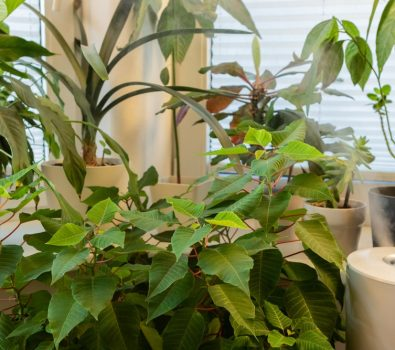 How to Add Humidity to A Grow Room