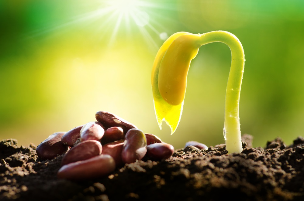 Seeds To Germinate in Soil