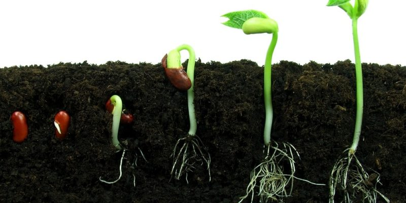 How Long Does It Take For Seeds To Germinate in Soil