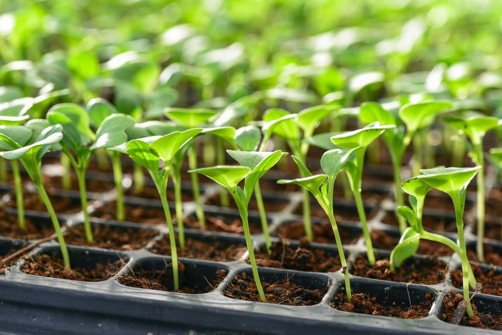 Does It Take For Seeds To Germinate in Soil