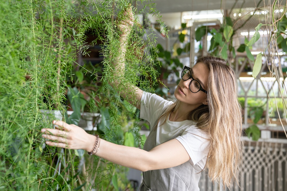 How To Take Care Of A Fern Houseplant (Indoor And Outside)