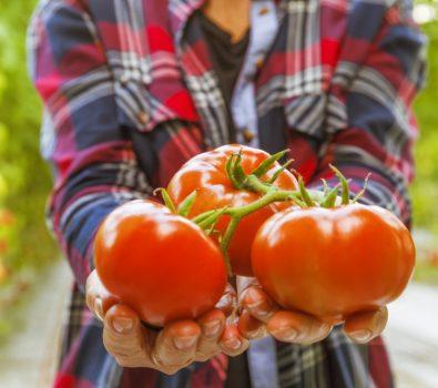 Add Nitrogen to Tomato Plants