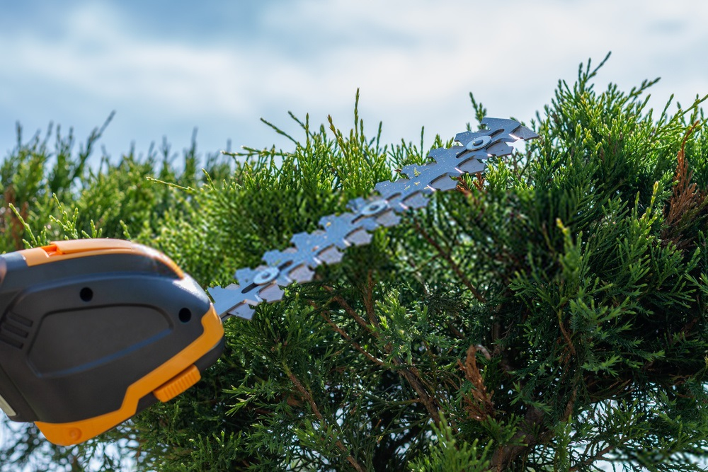 10 Best Cordless Hedge Trimmers