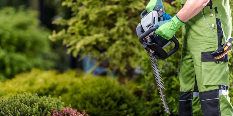 Best Cordless Hedge Trimmers