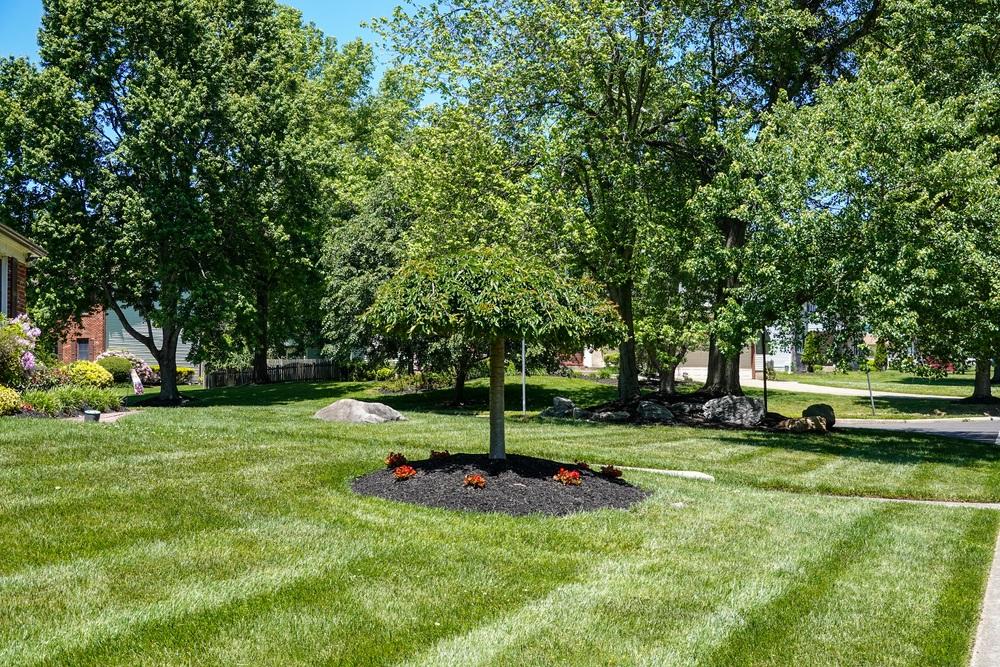 10 Best Mulching Lawn Mowers Reviews