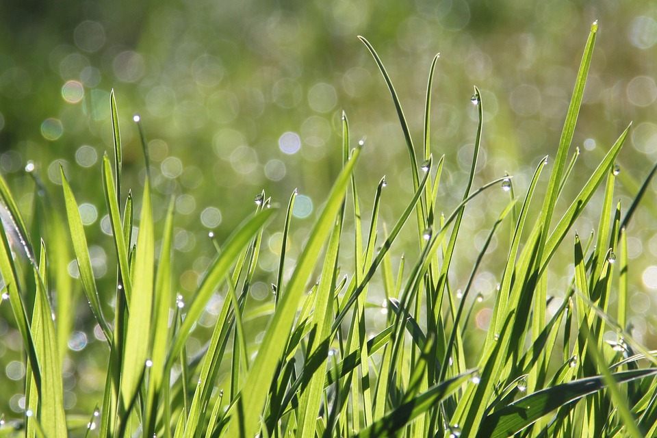 Fertilizers for Spring Season