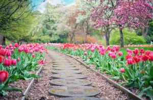 Best Fertilizers for Spring Season Reviews