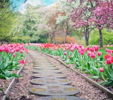 Best Fertilizers for Spring Season Reviews