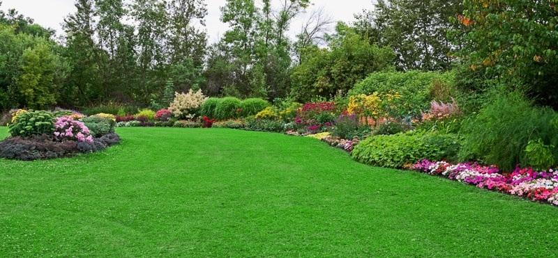 12 Best Fertilizer For St Augustine Grass 2020 Garden Mega